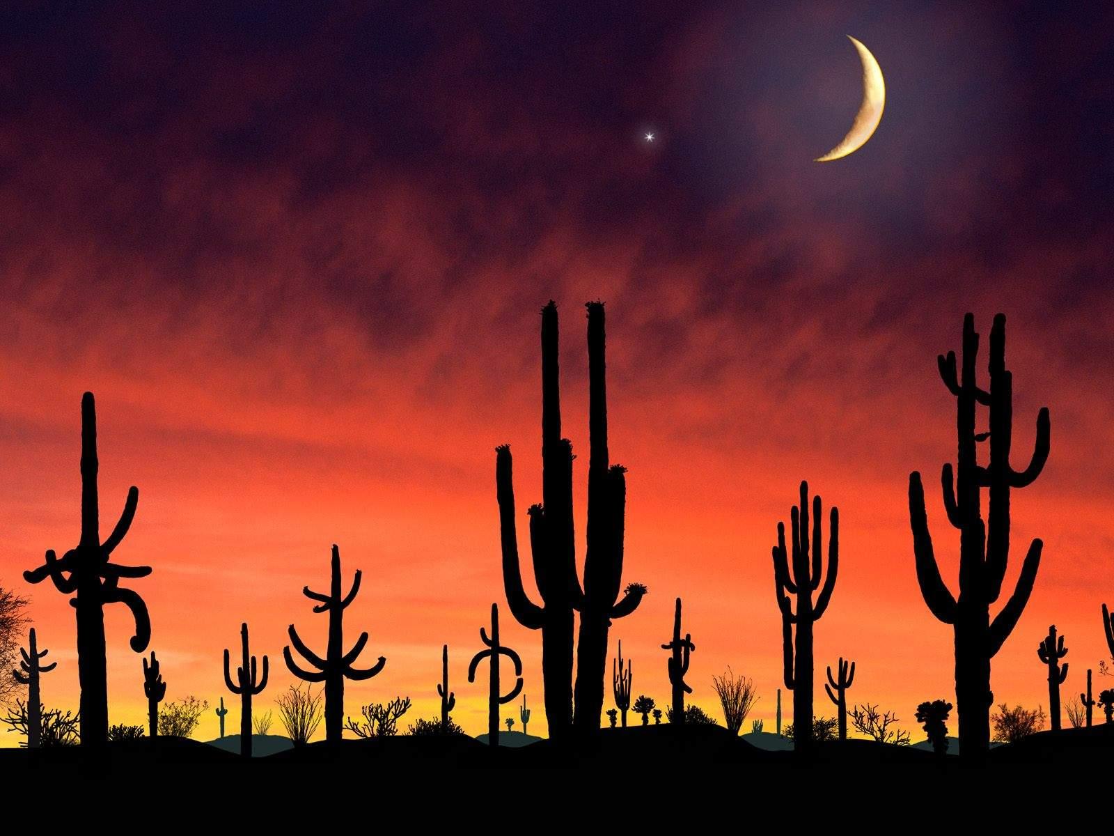 AZ Desert Moon